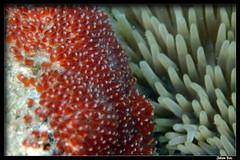Baie des Citrons (18.01.2020) (CurLy98800) Tags: noumea baie des citrons nouvelle caledonie new caledonia lagon underwater plongée diving snorkeling sous marine ile pacifique oceanie melanésie