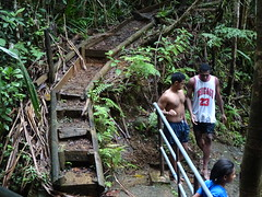 Damp Stairs (mikecogh) Tags: colisuva forest stairs ferns damp tanktop singlet fiji