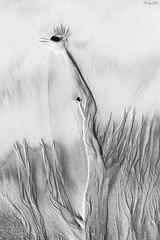 (Masako Metz) Tags: sand patterns beach oregon coast pacific northwest pnw nature creation outdoor abstract seascape texture lines blackandwhite monochrome rocks interesting ocean sea waves fineart