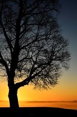 L'arbre d'en haut (La.Main.Noire) Tags: nikon d7000 nikkor prime dx 35mm18 laon aisne picardie arbre sunrise sky ciel matin paysage nature contrejour horizon amateur photography montsetmerveilles régionhautsdefrance