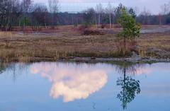 Munich - Cloud in a puddle (cnmark) Tags: germany deutschland bayern bavaria fröttmaningerheide nature natur landscape landschaft reflection mirror puddle pond tree baum cloud wolke sky himmel winter ©allrightsreserved