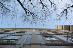 looking up (Hayashina) Tags: lisbon portugal window tree branches building hww