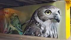 DVATE & Awes...Seymour, Victoria... (colourourcity) Tags: streetartaustralia streetartnow street streetartseymour seymour victoira colourourcity colourourcityseymour awesome nofilters barkingowl awes awesy dannyawes 90degreesart dvate dv8 jimmydvate seymourviadut musklorikeet birdgang streetart graffiti