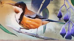 DVATE...Seymour, Victoria... (colourourcity) Tags: streetartaustralia streetartnow street streetartseymour seymour victoira colourourcity colourourcityseymour awesome nofilters dvate dv8 jimmydvate easternspinebill 90degreesart seymourviadut streetart graffiti