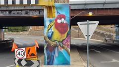 DVATE...Seymour, Victoria... (colourourcity) Tags: streetartaustralia streetartnow street streetartseymour seymour victoira colourourcity colourourcityseymour awesome nofilters dvate dv8 jimmydvate 90degreesart seymourviadut easternrosella rosella streetart graffiti
