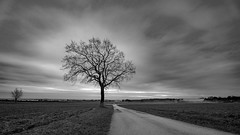 Roads and Trees and Skies.. (Bo Monsted) Tags: sigma 1424mm f28 dg hsm art landscape black white winter tree skies sky