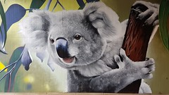 Awes...Seymour, Victoria... (colourourcity) Tags: streetartaustralia streetartnow street streetartseymour seymour victoira colourourcity colourourcityseymour awesome nofilters 90degreesart awes awesy dannyawes seymourviadut streetart graffiti