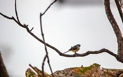The early bird (Rams Tammina) Tags: bird naturebirdssunrise natgeo photography