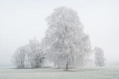 20191206_049c (novofotoo) Tags: baum bäume isental mooswiesen rauhreif wetter tree trees