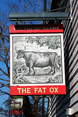 The Fat Ox pub sign Tenterden Kent UK (davidseall) Tags: the fat ox pub pubs sign signs inn tavern bar public house houses tenterden kent uk gb british hanging shepherd neame