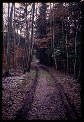 Bent muddy road (Rollei 35SE) (mmartinsson) Tags: color winter rollei35se h 840 35mm film analoguephotography negative rollei scan dark road forest epsonperfectionv700 fujifilm 2019 sonnar2 pro400 tjörnarp skånelän sverige