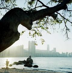 * (David Davidoff) Tags: tree scenery seascape sea rolleiflex35f planar75mmf35 kodakektar100 colorfilm analogue square mediumformat 6x6 120 tlr twinlensreflex vintagecamera leiyuemun hongkong