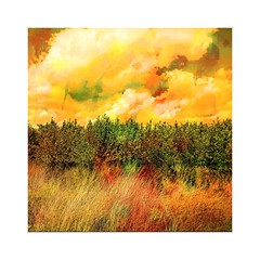 Clouds. trees and grasses (b_kohnert) Tags: art painting clouds sky landscape light trees fields way grasses digitalart digitalpainting outdoor