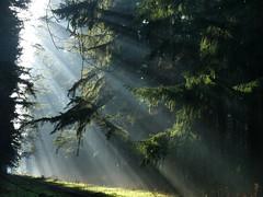 Afternoon rays (yvonnepay615) Tags: panasonic lumix g9 nature woods rays mist lynfordwoods norfolk eastanglia uk