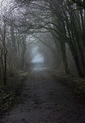 Walk towards the light - Explore 23.1.20 (Jo Evans1 - off and on for a while) Tags: national botanic gardens wales walk towards light gate misty atmosphere