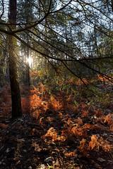 Gorge aux Archers valley (hbensliman.free.fr) Tags: travel nature landscape forest winter france foliage sunrise outdoor outside plants trees pentax pentaxart pentaxk1