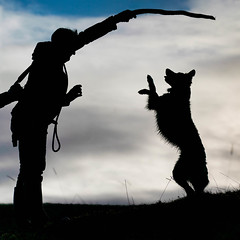 Dog Conductor (FireDevilPhoto) Tags: silhouette outdoors people nature backlit dog blackcolor men animal fun friendship sunset togetherness playful sky happiness grass action sunlight child bordercollie pet stick sony a9 stf yorkshiredales