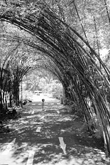 022/366: the sunny afternoons of childhood (Fille.de.Lumière) Tags: blackandwhite blackwhite blackandwhitephotography bamboo tunnel tunnelvision monochrome monochromatic monochromeworld 366 project366 365 project365 biketrack playground