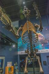 DSC_4048.jpg (bobosh_t) Tags: boonshoftmuseum boonshoft naturalhistory museum