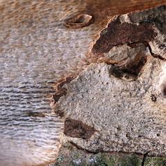 (jc.dazat) Tags: paréidolie ecorce arbre bark tree nature visage photo photographe photographie photography canon jcdazat