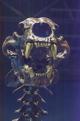 DSC_4050.jpg (bobosh_t) Tags: boonshoftmuseum boonshoft naturalhistory museum