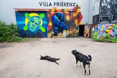 amsterdam-noord 2015 (hansfoto) Tags: amsterdam noord paintbeer squat kraakpand villafriekens graffiti streetart