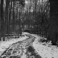 Light Winter (Alex Luyckx) Tags: oakville ontario canada mccraneyvalleypark mccraneyvalley urban park greenspace sheridan sheridancollege trafalgarroadcampus campus college school institution winter snow walk hike startofterm escape frankeheidecke rolleiflex rolleiflex28f tlr 120 6x6 square mediumformat carlzeissplanar80mm128 lomography kino lomographyberlin400 berlin400 orwon74 asa400 kodak hc110 kodakhc110 dilutionb 131 epsonv700 adobephotoshop bw blackwhite photography film filmphotography believeinfilm filmisalive filmisnotdead