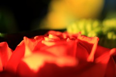 Birthday Flowers IV (Keizerphoto) Tags: macro flowers bright colors details
