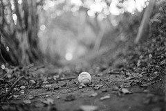 Wilson ~ (H.Treuth) Tags: wilson tennisball woods path leaves lost onethatgotaway bw blackandwhitephotography ishootfilm filmphotography nikon 50mm ilford ilfordhp5plus400 ilfordhp5 fm2 135 selfdevelopedfilm rodinal rodinaldevelop