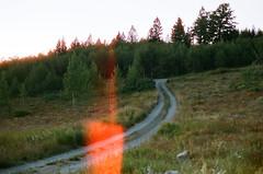 them dirt roads (Marc Rodriguez 24) Tags: 35mm color negative cine film 50d f3hp ais analog light leak woods dirt road