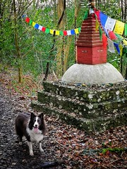 Tia (Ian, Bucks) Tags: dog canine woodlands woods stupa daytime outdoors