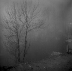 Un souvenir brumeux (aria.ebady) Tags: square squareformat 120mm 120 mediumformat iran ilford misty mist tree foggy memory lomo lubitel2 blackandwhitephotography blackandwhite bw bnw analogphotography analogcamera analog filmphotography film ilfordfp4