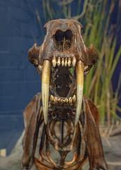 DSC_4057.jpg (bobosh_t) Tags: boonshoftmuseum boonshoft naturalhistory museum