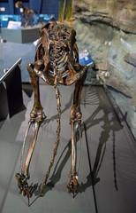 DSC_4069.jpg (bobosh_t) Tags: boonshoftmuseum boonshoft naturalhistory museum