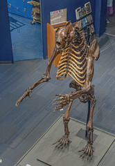 DSC_4070.jpg (bobosh_t) Tags: boonshoftmuseum boonshoft naturalhistory museum