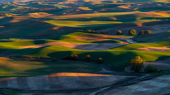 Sunset views from Step toe butte !! (pankaj.anand) Tags: 2019 agriculture clouds country countryside course farm field golf grass highland hill lake landscape meadow mountain mountains outdoor outdoors rural scenery scenic sky sonya7iii summer sunny travel tree trees washington water step palo palouse