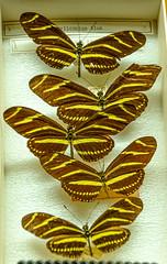 DSC_4102.jpg (bobosh_t) Tags: boonshoftmuseum boonshoft naturalhistory museum