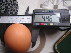 Chicken Coop Egg No 22 - Wide 44.6mm - 22-01-2020 (Lord Inquisitor) Tags: chicken chickencoopeggs heneggs browneggs2020 brown browneggs wide vernier medium