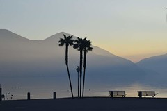 Le Palme (mirella cotella) Tags: landscapes lakes waterscape trees palmtree