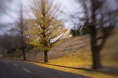 one day , on my walk (sshusaku) Tags: autumn orange yellow woods botanical sol45 tree red autumnleaves