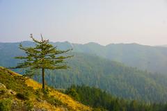 Smoke & Views (grantmeagher) Tags: horizon mountain mountains trees forrest woods smoke view warm california travel outside