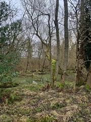 Swamp (BurnThePlans) Tags: woods trees forest wet water swamp bog
