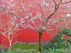 Flores-Rotxapea (eitb.eus) Tags: eitbcom 20267 g1 tiemponaturaleza tiempon2020 nafarroa pamplonairuña txelofernández