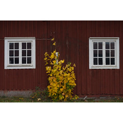 OW XXXVI ([ Time - Beacon ] II) Tags: tb wall window windows rural sweden falu falured building barn wooden tree leaves autumn red yellow foliage maple