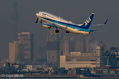 MAK-4143 (oga_mak) Tags: makogawauchi ogamak 東京都 日本 500mm eos eos1dxmarkii canon myeosphoto airport aircraft airplane aviation boeing b738 boeing737800 boeing737 airways allnipponairways hanedaairport hikoukiclub everybodyphoto キヤノン 羽田空港 飛行機撮り隊 飛行機大好き 飛行機写真 飛行機のある風景 飛行機倶楽部 飛行機 写真好きな人と繋がりたい カメラ好きな人と繋がりたい エビフォト mytokyois