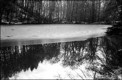 a bisserl Eis geht immer (-; (jo.sa.) Tags: lebensraum landschaft natur eis schwarzweiss schwarzweissfotografie schnee wald wasser spiegelung analog analogefotografie bw sw kleinbild standentwicklung fomapan400 rollei35se