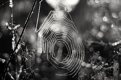 Bubbles catcher (Stefano Rugolo) Tags: stefanorugolo pentax pentaxk5 smcpentaxm50mmf17 kmount bubbles web dew backlight bokeh abstract spiderweb monochrome blackandwhite manualfocus manual vintagelens pentaxian italy