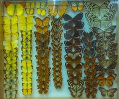 DSC_4123.jpg (bobosh_t) Tags: boonshoftmuseum boonshoft naturalhistory museum