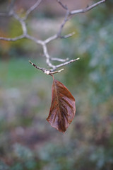 DSC02572 (Lens Lab) Tags: sony a7r plants garden tree leaves branches magnolia canonfl 55mm f12
