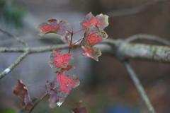 DSC02603 (Lens Lab) Tags: sony a7r plants garden komura 80mm f18 leaves